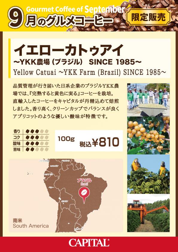 9月のグルメコーヒー キャピタルコーヒー ブラジル YKK農場 イエローカトゥアイ