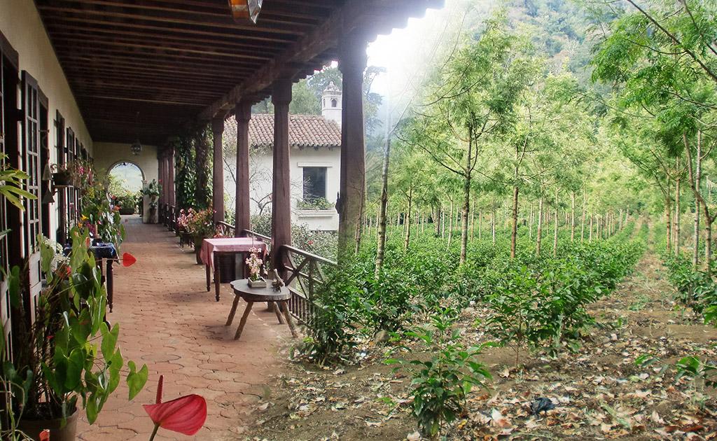グアテマラ カルモナ農園