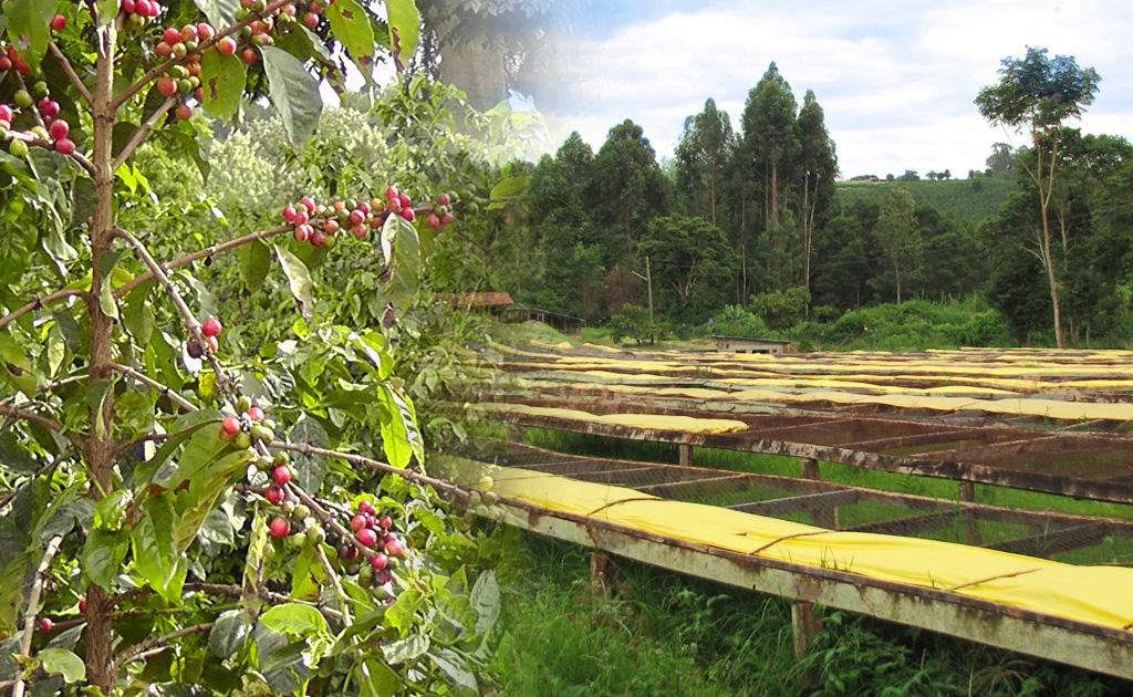 ケニア ジャングルエステート